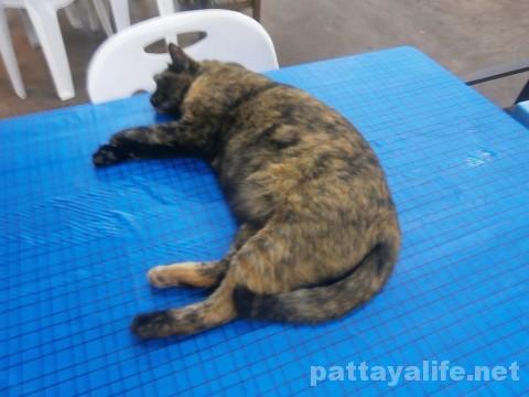 カオトムプラジャンバンのネコ