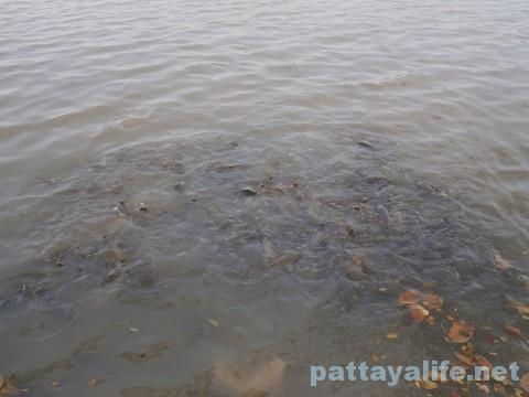 ワットウィハンシアン横の池 (2)
