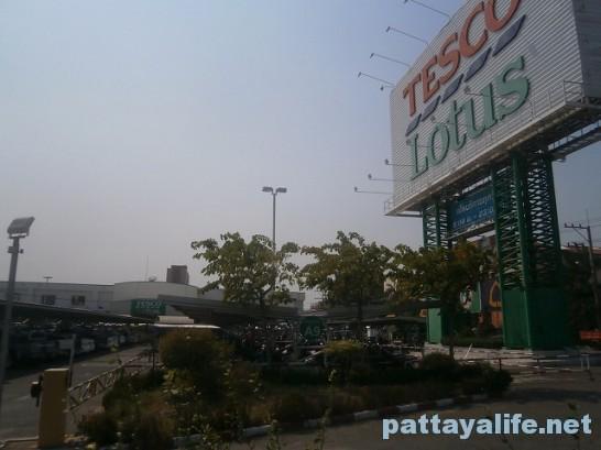 パタヤタイのテスコロータス (2)