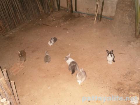 ジャングルリゾートのウサギ