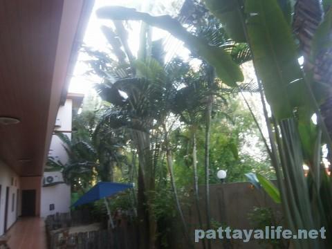 ジャングルリゾート (3)