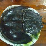 カブトガニも食べられる。タイ・チャン島の安くてうまいシーフードレストラン。